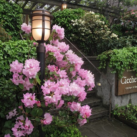 Cicchetti Entrance with Flowers in Bloom
