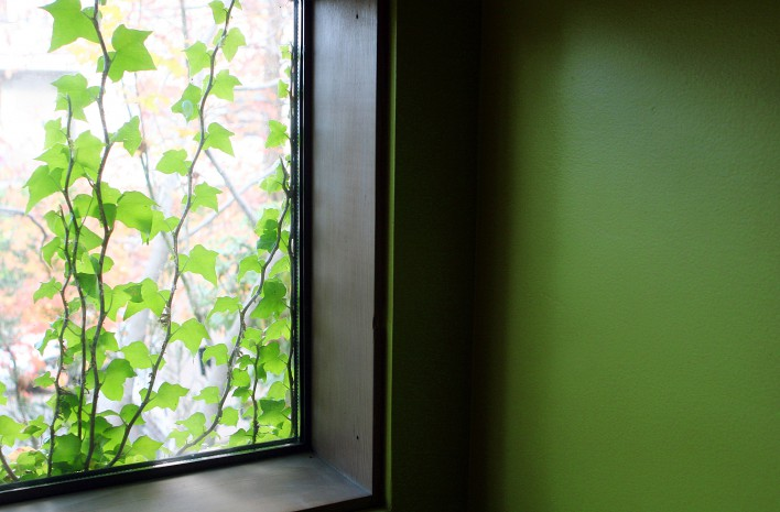 Ivy Against Cicchetti's Green Walls